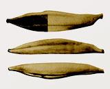 焼津鰹節標準型